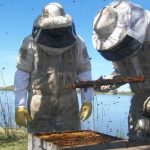 La provincia realiza una formación de técnicos apícolas